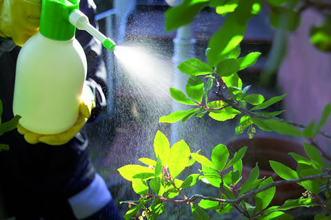 Come-e-quando-vaporizzare-le-piante